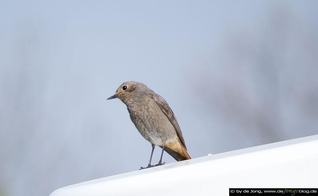 Vogel auf einer Laterne