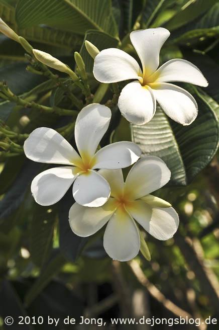 Kelchblüte