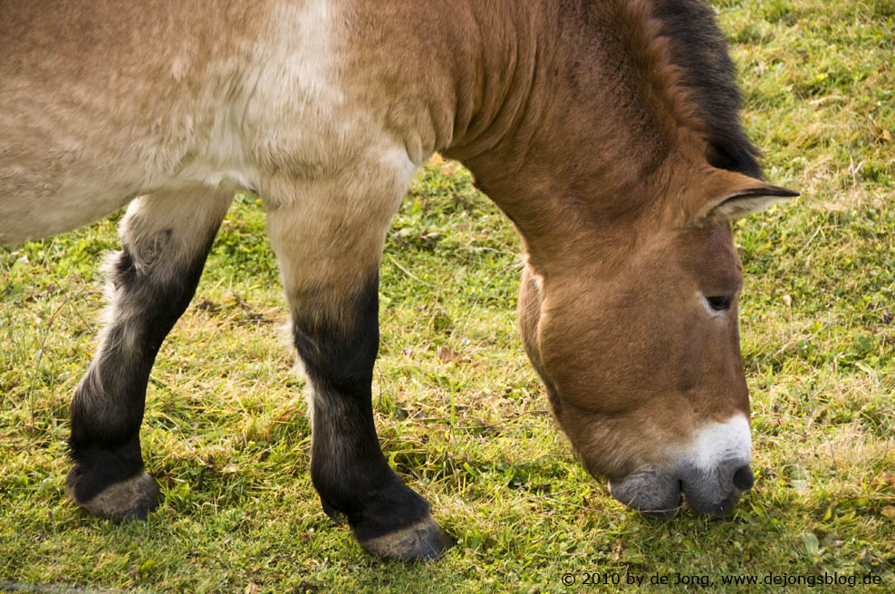Makro Pferd