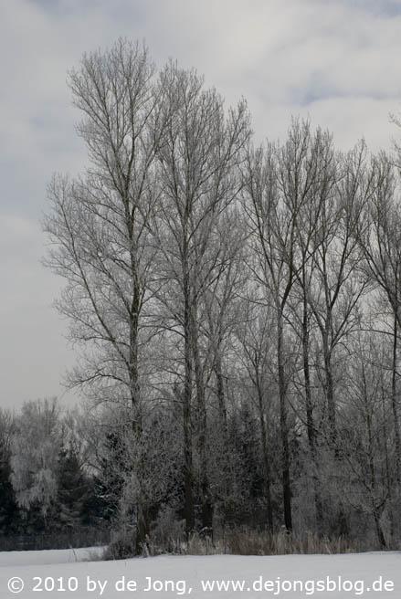 Bäume