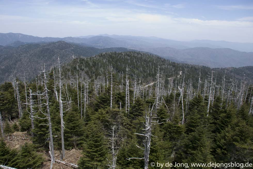 abgestorbener Wald