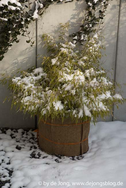 Bambus im Winter
