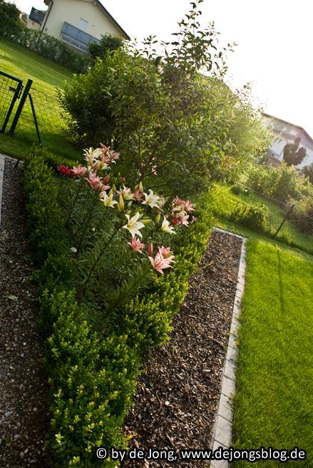 Gartenecke mit Lilien