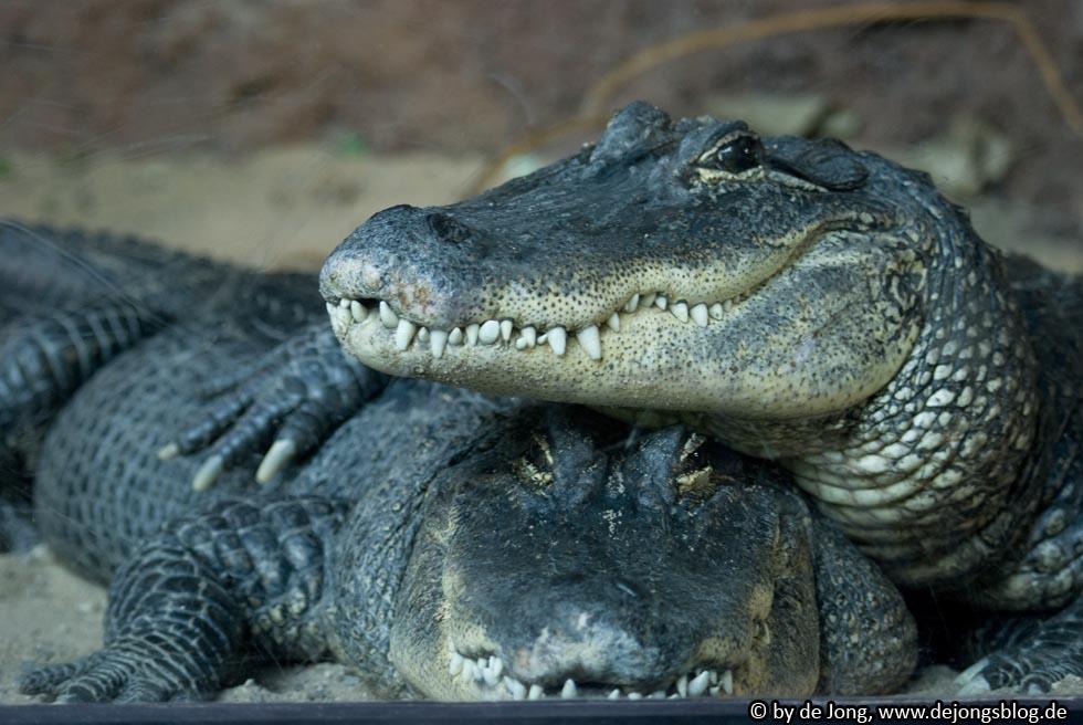 Zoo München - Krokodile