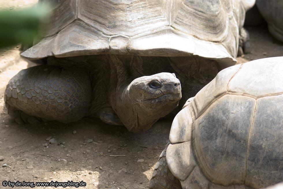 Riesenschildkröte - Tierpark Hellabrunn