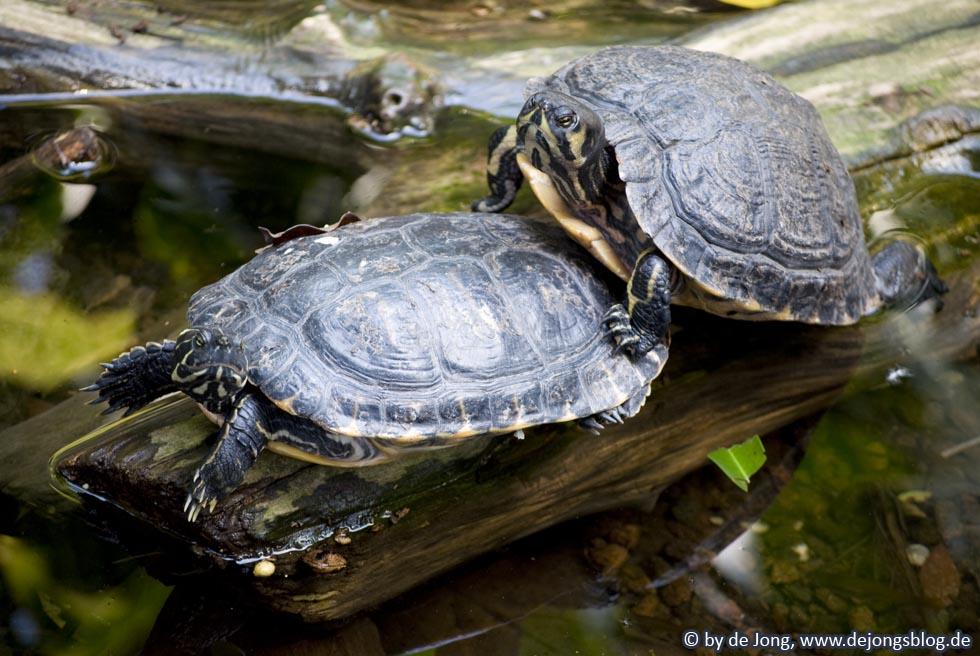 Schildkröte - Tierpark Hellabrunn