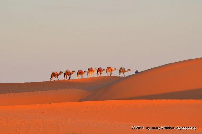 20110214_Marakesch_Wüste_041
