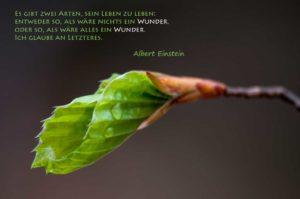 20100501_122228_Natur-Einstein